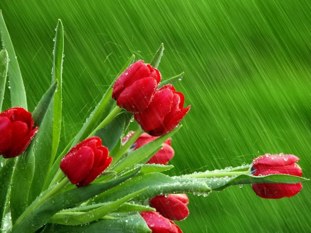 Petniči cvet